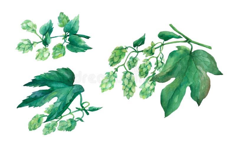 Fije los saltos verdes de la rama Ilustración de la acuarela stock de ilustración