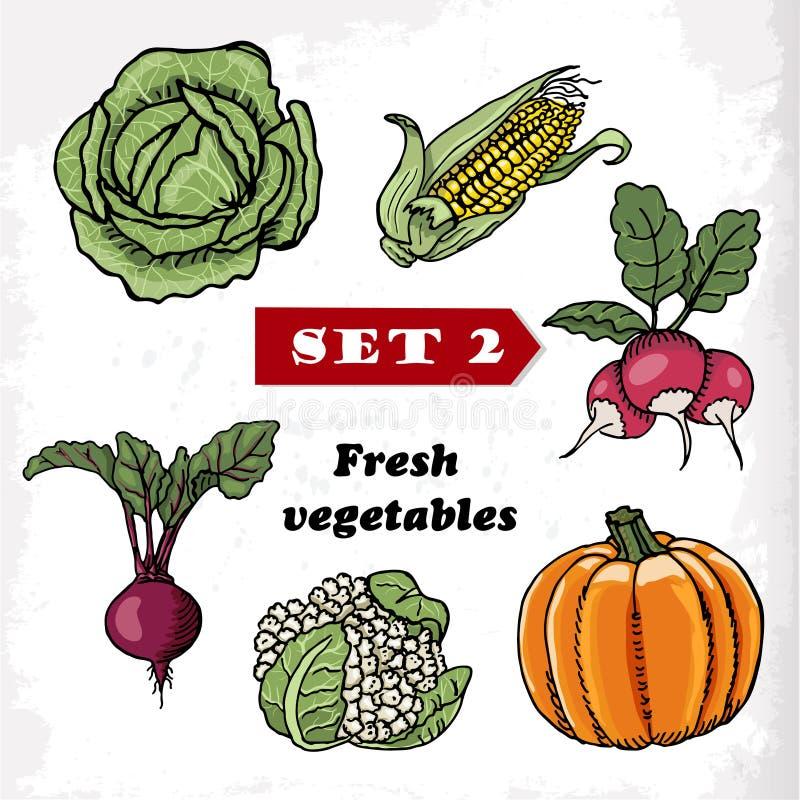 Fije 2 verduras frescas col, maíz, rábano, calabaza, coliflor y remolachas Ilustración del vector libre illustration