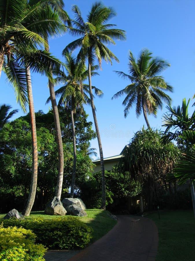 Fiji stock foto
