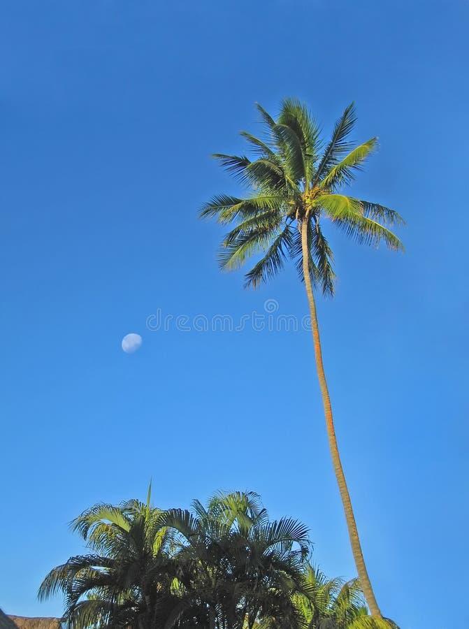 Fiji imagens de stock royalty free