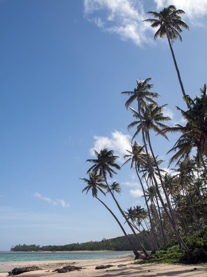 Fiji wyspy najlepszy plażowa fotografia Wysokie palmy, las i jasny niebieskie niebo, zdjęcia royalty free