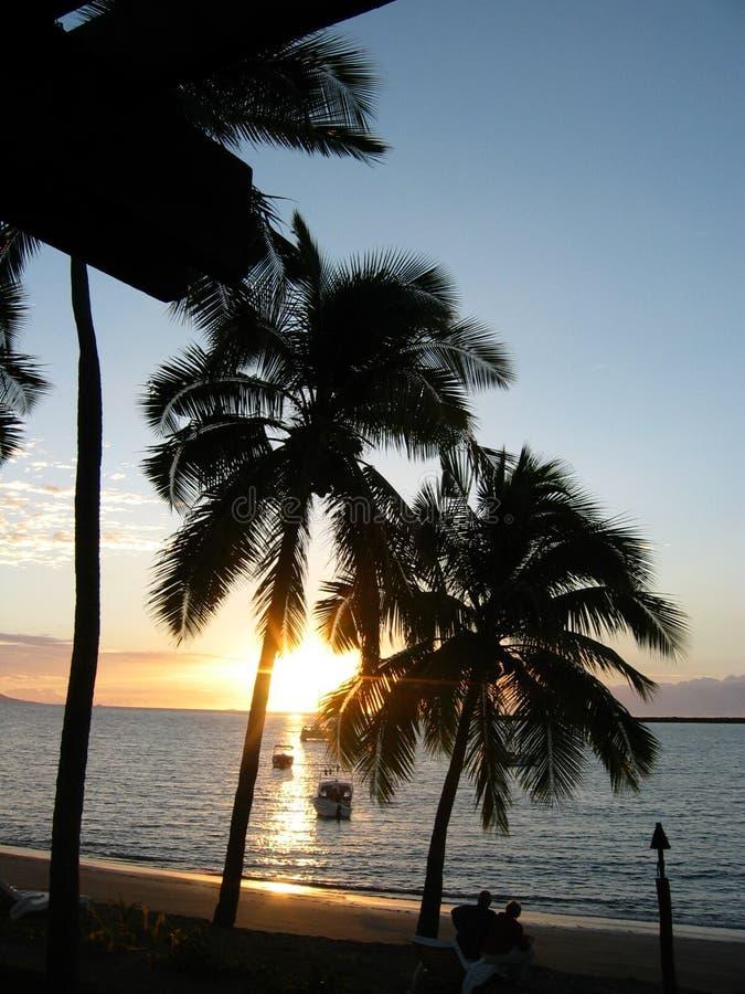 fijian φοίνικες παραλιών στοκ φωτογραφία με δικαίωμα ελεύθερης χρήσης
