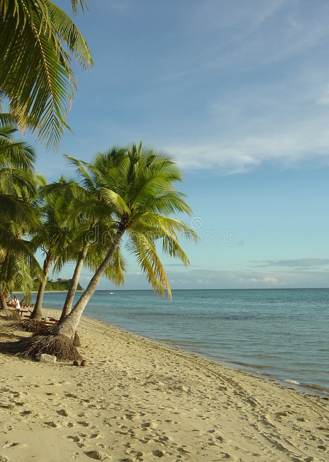 Fijian-Strand-und Palmen stockbilder