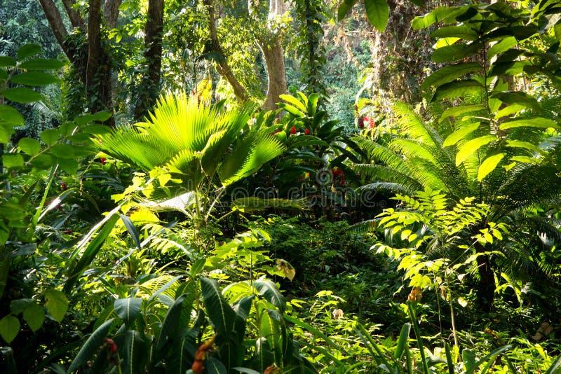 Fijian tropical jungle royalty free stock image
