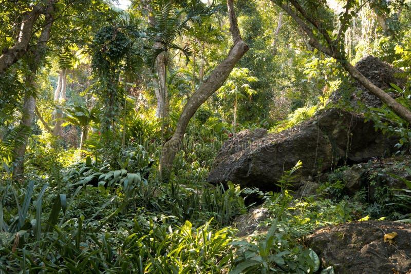 Fijian tropische wildernis royalty-vrije stock foto