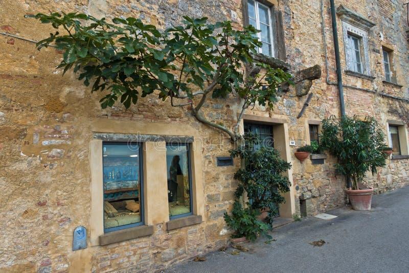 Fikonträdet som är främst av gammalt, stenar byggnad, gataplats från Voltera i Tuscany royaltyfria bilder