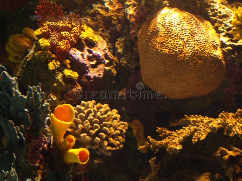 Filón coralino 2 imagenes de archivo