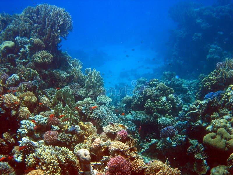 Filón coralino 2 foto de archivo libre de regalías