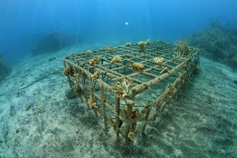 Filón coralino artificial imagenes de archivo