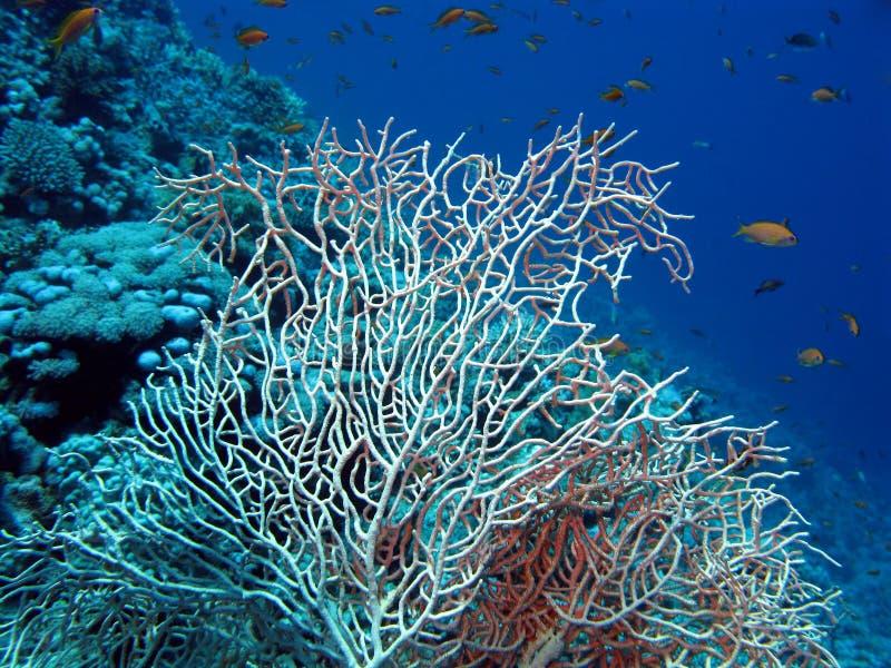Filón coralino con el azote del mar fotos de archivo libres de regalías