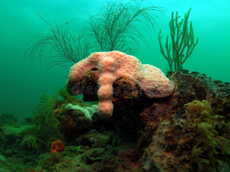 Filón coralino con el mar Rod imagen de archivo libre de regalías