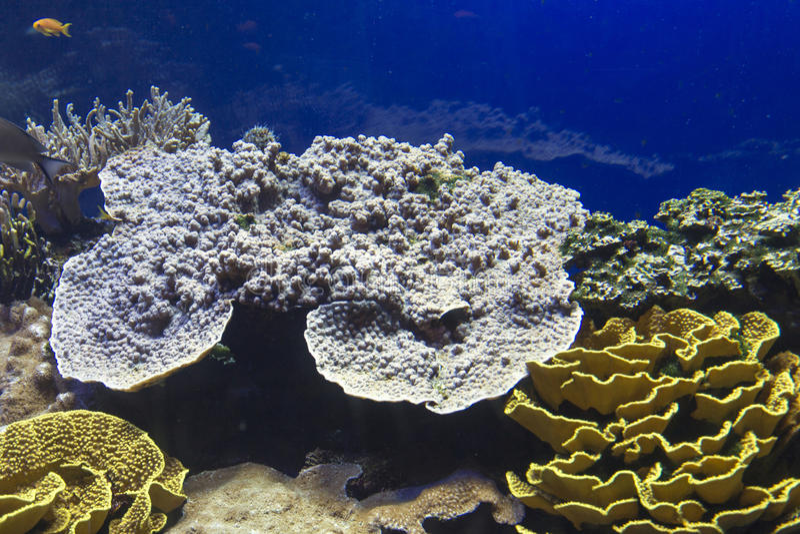 Filón coralino con los corales duros imagen de archivo libre de regalías