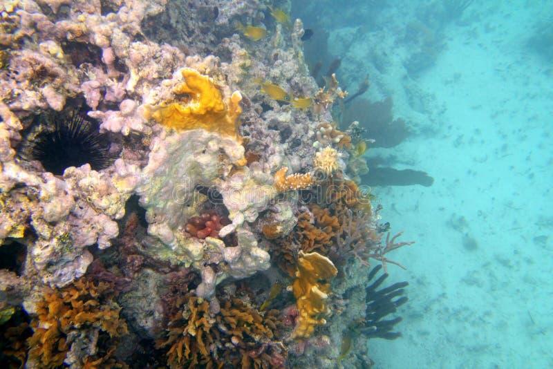 Filón coralino en Riviera maya Cancun México fotos de archivo