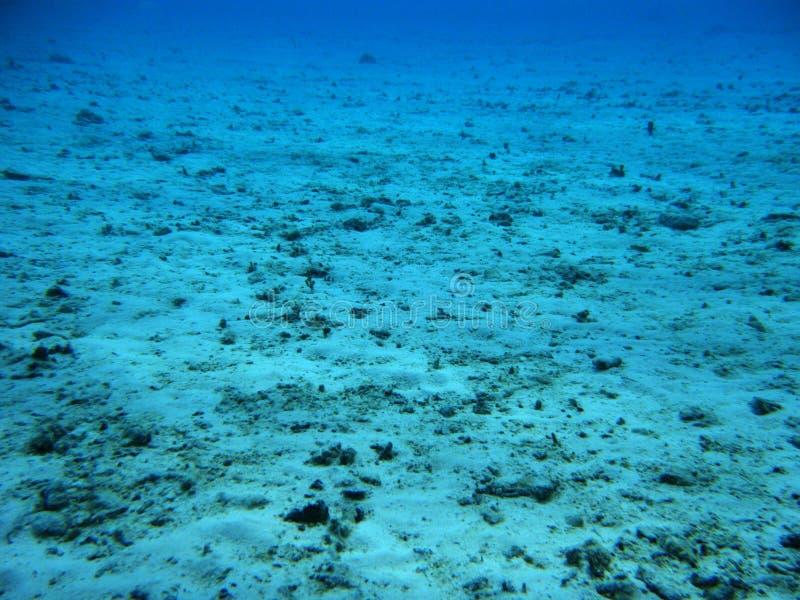 Filón coralino muerto