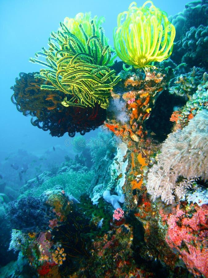 Filón coralino tropical foto de archivo libre de regalías