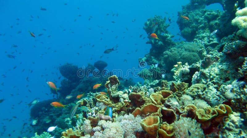 Filón coralino y pescados tropicales imagen de archivo
