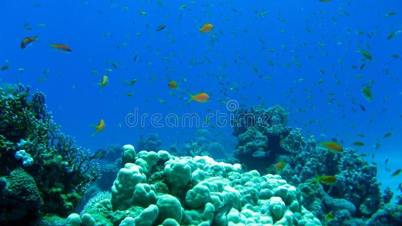 Filón coralino y pescados tropicales foto de archivo