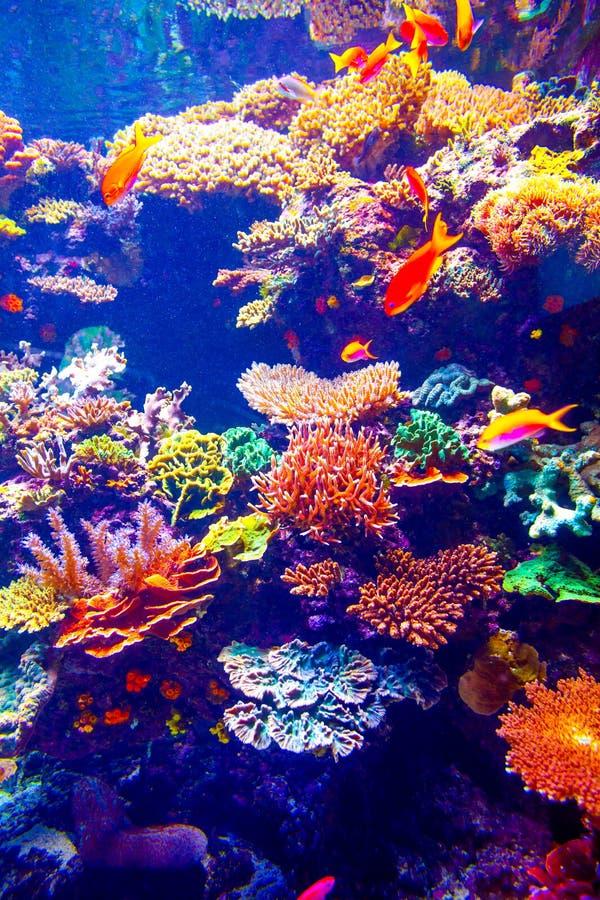 Filón coralino y pescados tropicales imagen de archivo libre de regalías