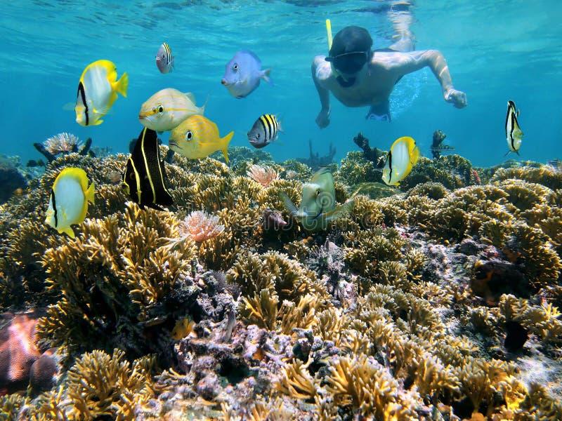 Filón coralino y snorkeler fotografía de archivo libre de regalías