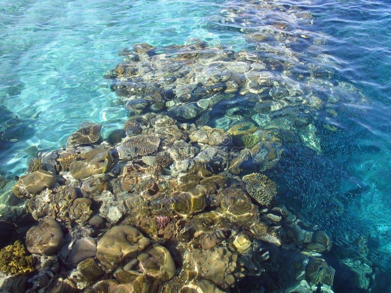 Filón de corales en el Mar Rojo fotografía de archivo