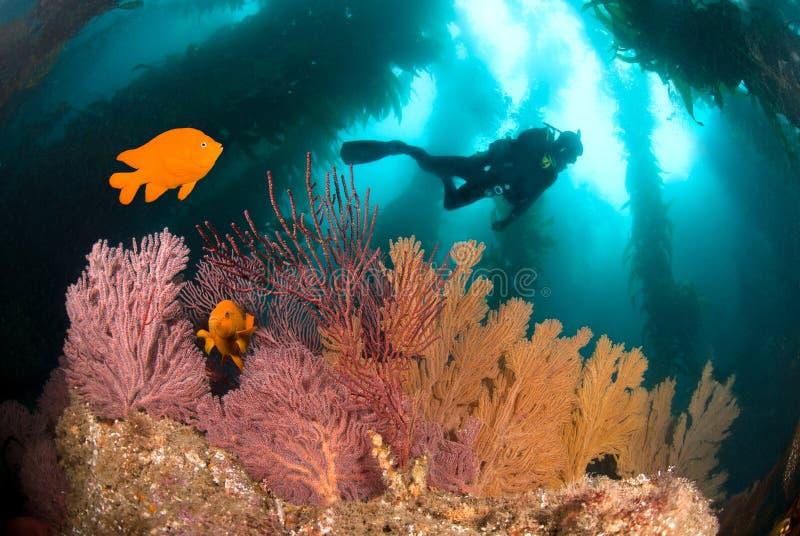 Filón subacuático colorido fotos de archivo