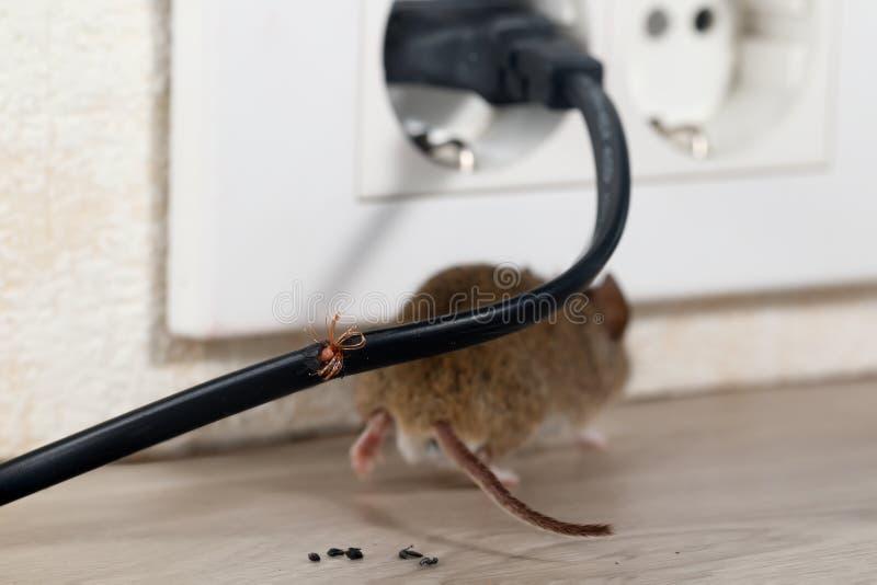 Fil cassé par plan rapproché La souris fonctionne loin photo libre de droits