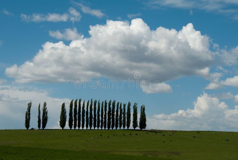 Fila de árboles fotos de archivo libres de regalías
