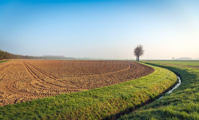 Fila de árboles desnudos altos en el borde de un campo arado imagenes de archivo