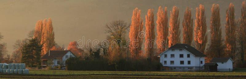 Fila de árboles en la oscuridad fotografía de archivo libre de regalías