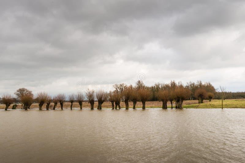 Fila de árboles inundados y de un cielo nublado imágenes de archivo libres de regalías