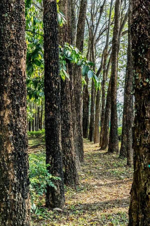 Fila de árboles verdes imagen de archivo