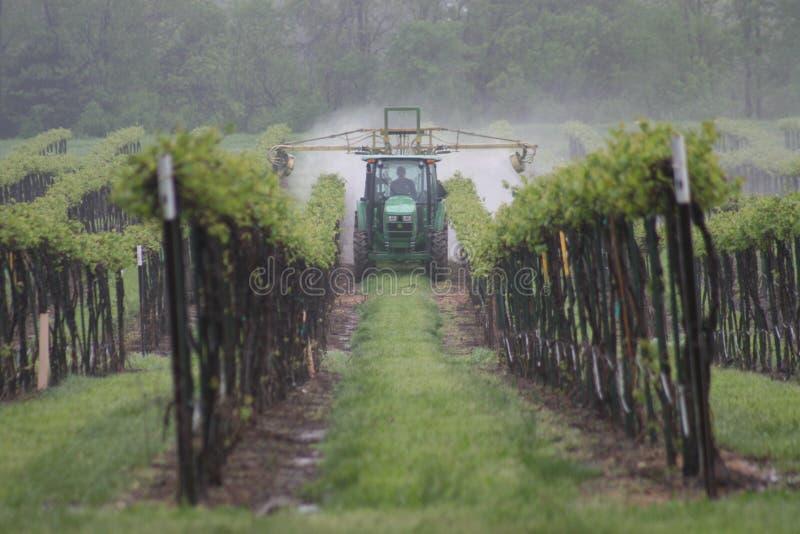 Fila de la uva en Missouri 2019 III fotos de archivo libres de regalías
