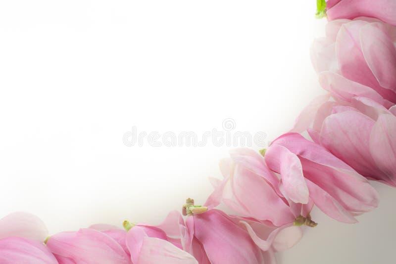 Fila de las flores de la magnolia imagen de archivo libre de regalías