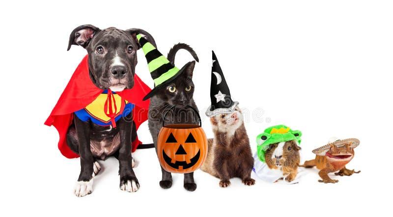 Fila de los animales domésticos del hogar en disfraces de Halloween imagenes de archivo