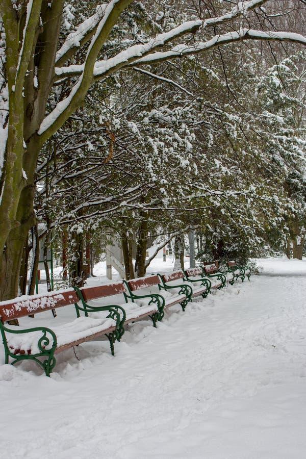 Fila de los bancos cubiertos con nieve debajo de árboles Parque nevoso del invierno con los bancos Callejón congelado en parque B foto de archivo libre de regalías