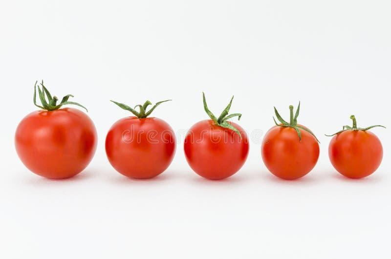 Fila de los tomates de cereza imagenes de archivo