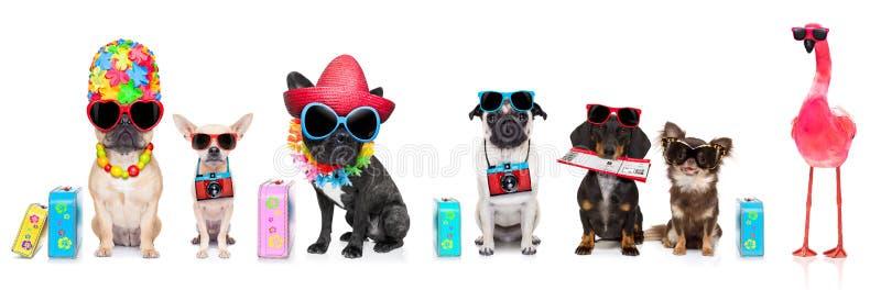 Fila de perros el vacaciones de verano imagen de archivo