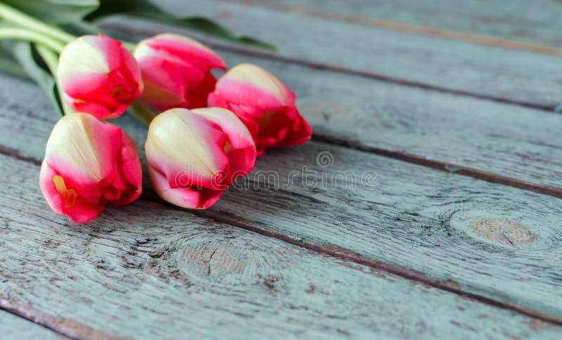 Fila de tulipanes rosados contra un fondo azul con el espacio para el texto Fondo festivo de la flor para un d?a o el otro de mad imagen de archivo
