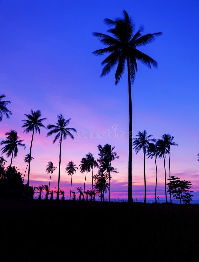 Fila degli alberi del cocco con il bello tramonto o alba drammatico del cielo sopra il paesaggio tropicale del mare di bella natu fotografie stock