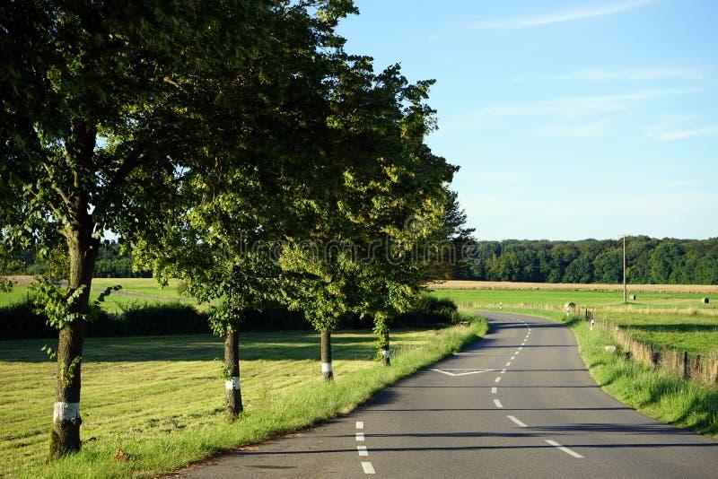 Fila degli alberi e della strada fotografia stock libera da diritti