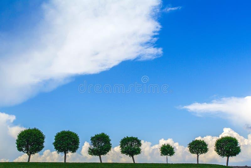Fila degli alberi sotto il cielo triste albero sette in una linea fotografia stock