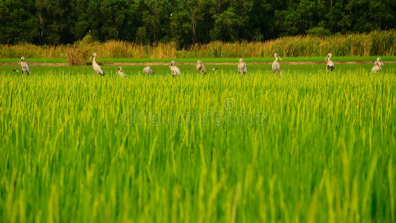 Fila degli uccelli fotografia stock libera da diritti