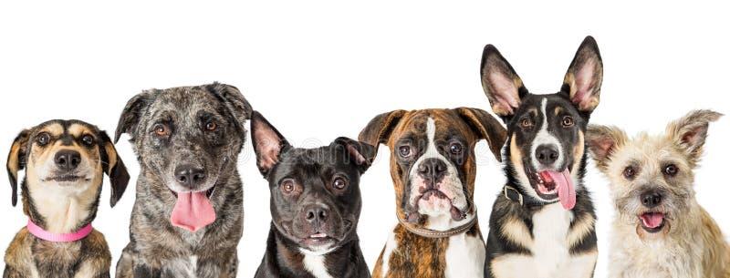 Fila dei fronti misti svegli del cane della razza immagine stock libera da diritti