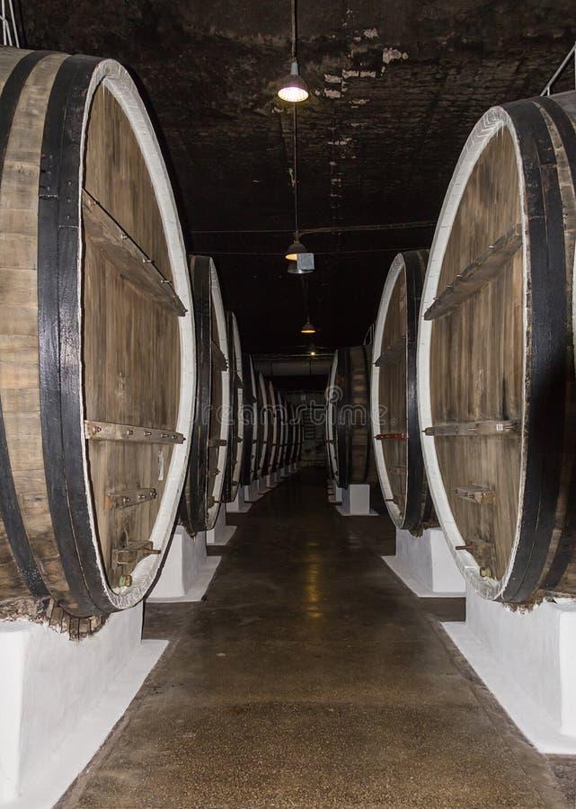 Fila del almacén del pasillo de barriles de madera grandes de whisky del almacenamiento del vino fotos de archivo libres de regalías