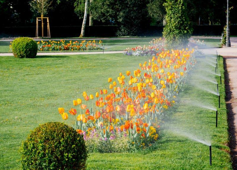 Fila del sistema de irrigación moderno de regadera que trabaja por la mañana imagen de archivo libre de regalías