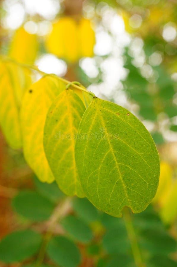 Fila delle foglie immagini stock libere da diritti