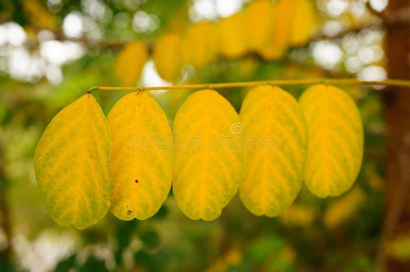 Fila delle foglie fotografie stock libere da diritti