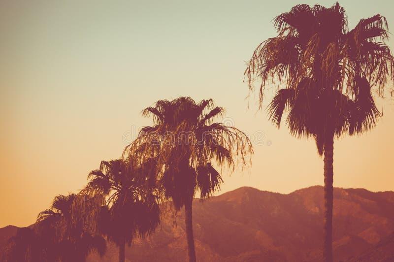 Fila delle palme e delle montagne al Palm Springs di tramonto immagini stock libere da diritti