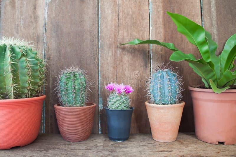 Fila delle piante del cactus sulla tavola di legno, giardino domestico fotografia stock