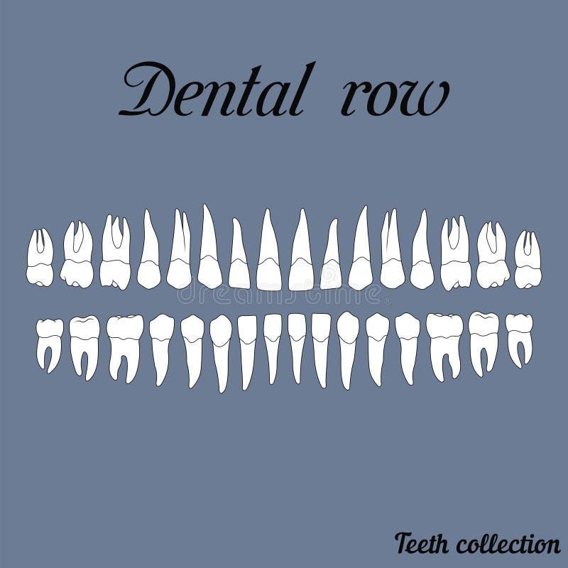 Fila dental libre illustration